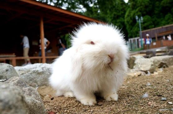 ヨーデルの森のウサギ