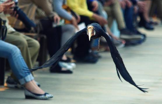 神戸花鳥園のバードショー