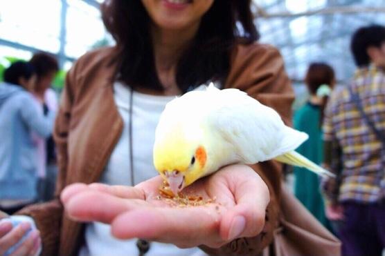 神戸花鳥園のオウム・インコふれあいコーナー