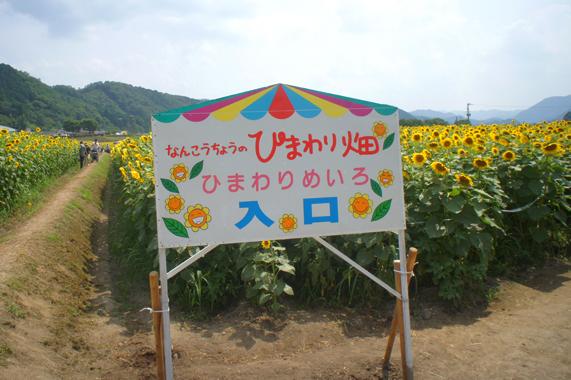 関西最大級のひまわり畑【兵庫県/佐用町】